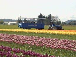 Skagit photos - tractor