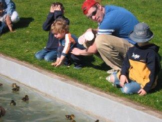 Ducks in Bellevue City Park
